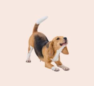 perro-mascota