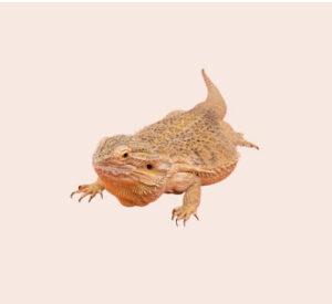 reptiles-y-anfibios