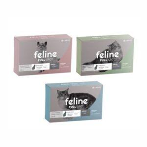 FELINE-FULLSPOT-1-1.jpg