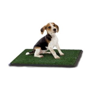 Green-Carpet-Classic.png